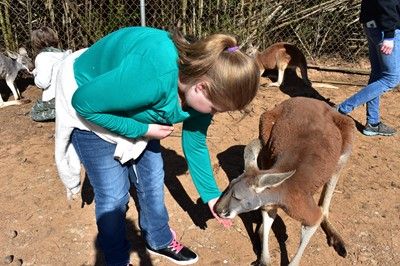 On Friday, March 22, 2019, the Gifted & Talented students at Albany Elementary School traveled to the Kentucky Down Under Adventure Zoo in Horse Cave, Kentucky.