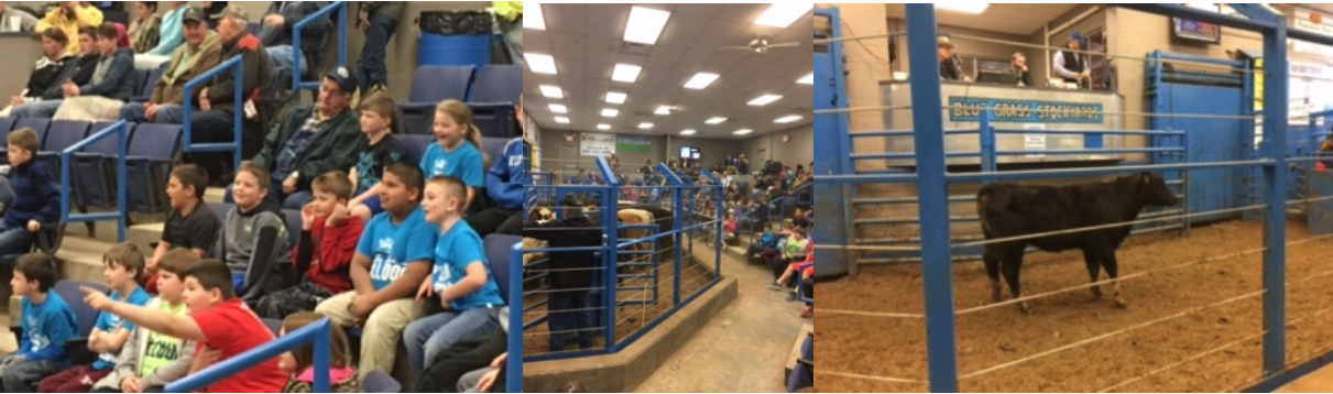 The 3rd grade students at Albany Elementary School recently visited the Bluegrass Stockyards to view a stock sale.